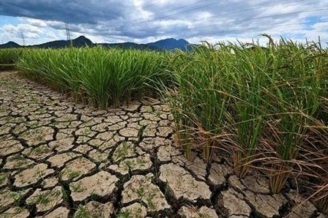 binh_thuan_declares_level_2_drought_emergency