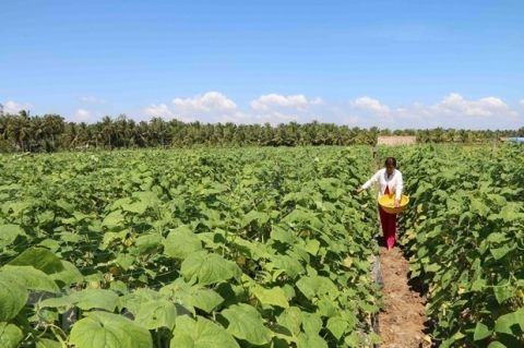 mekong_delta_province_to_help_farmers_with_17_million_usd_for_drought_saltwater